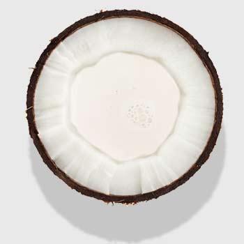 Kokosoel